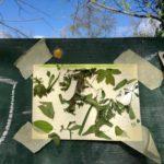 herbs under blue sky - 2016