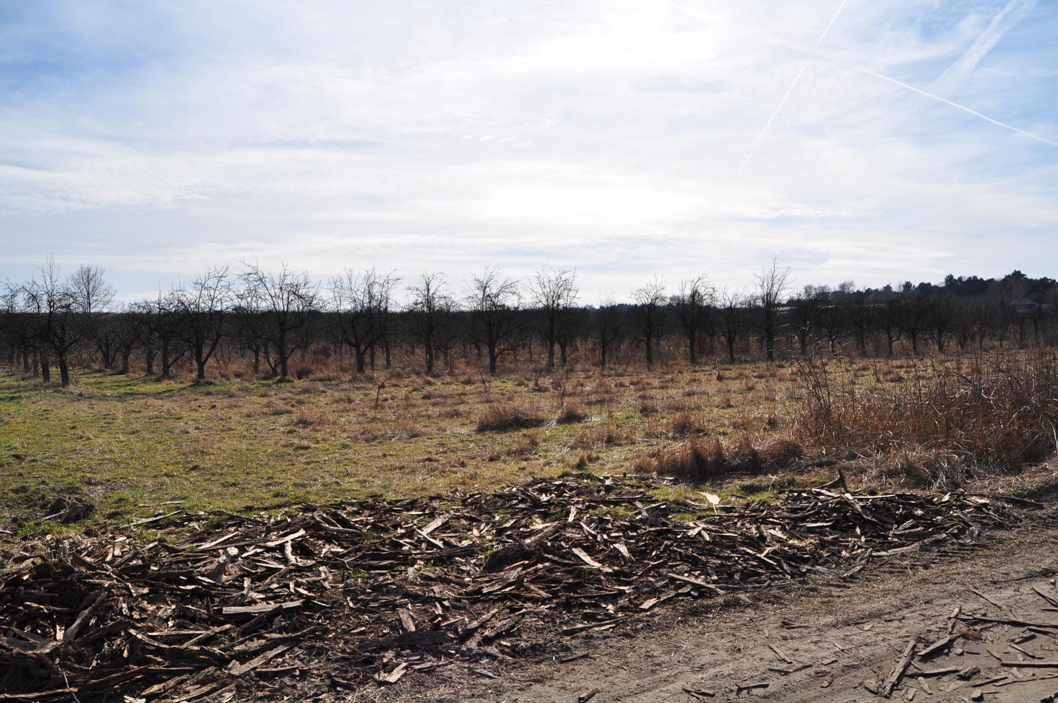 Kühler Vorfrühling in Ostbrandenburg 2015